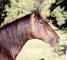 Sr Paso in December 2000