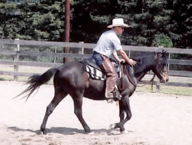 Josh Nichol on Sr. Paso during a clinic with Harry Whitney, April 2000. Good for his spirit and he should have worn pastern boots to avoid overstressing the healing tissues.