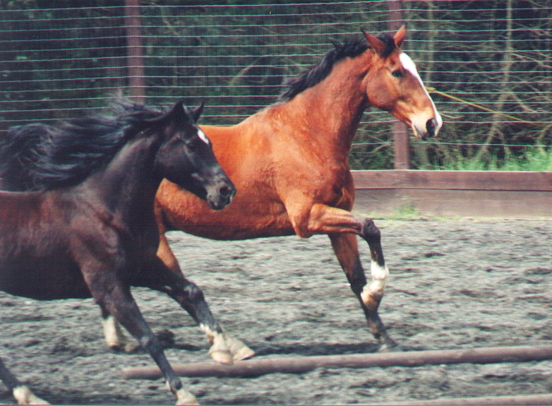 s and r gallop